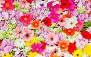 цветы,экибана,цветочный дизайн