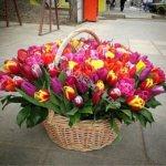 экибана, оформление корзин, плетёные корзины, плетение корзины, корзины под цветы